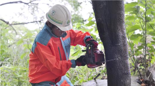 住宅地の木を切る