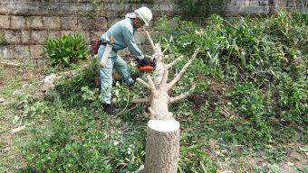 伐採作業 緑化センターのサムネイル