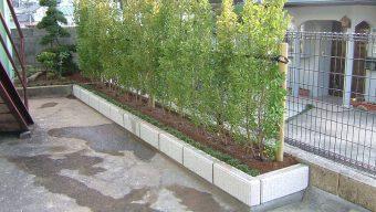 黄金マサキ植栽のサムネイル