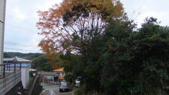 樹木の伐採 緑化センターのサムネイル
