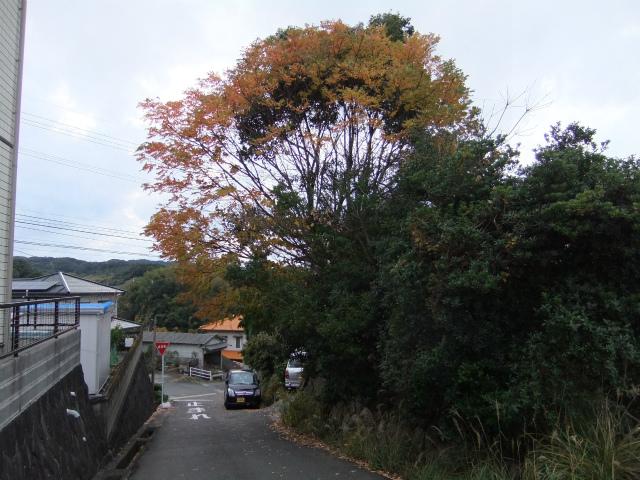 住宅地の樹木の伐採